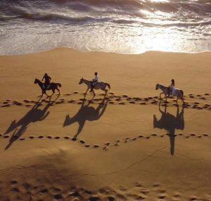 Horses by the beach aerial shot